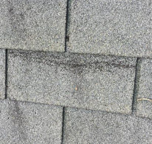 how to determine if your roof shingles needs replacing