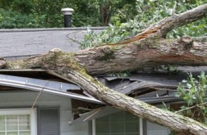 tree caused storm damage on house
