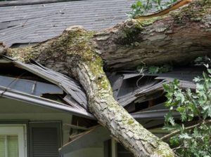 roof destroyed by fallen tree
